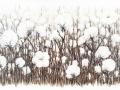 Piazzoli Laetitia      coton.jpg