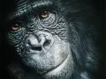 Poulet Lionel-Gorille-de la serie aime et menace.jpg